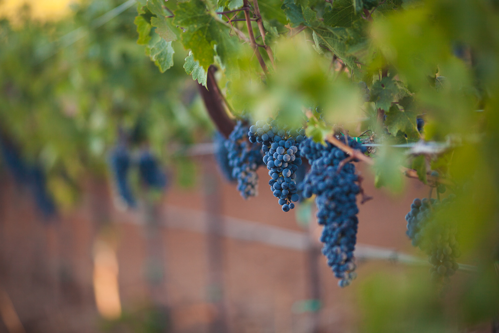 Bordeaux adopts grapes from other countries