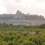 native vineyard